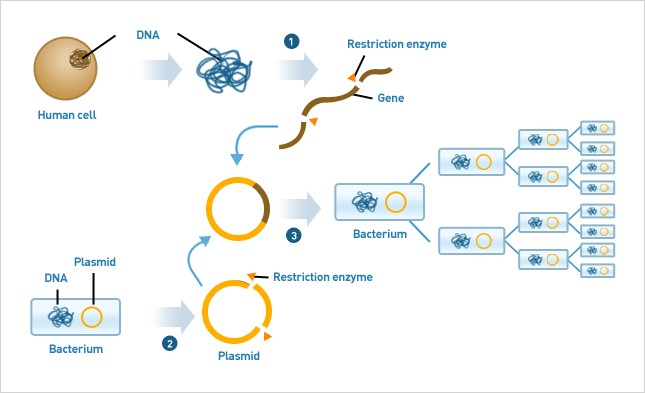 application of gene cloning in biotechnology